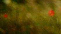 ...und ich durchstreife Felder und Wiesen by Katharina Kabara