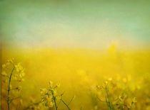 gelbe Periode von Katharina Kabara