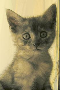 Katze von Henriette Abt