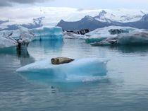 Gletscherlagune Jökulsarlon in Island mit Robbe von mellieha