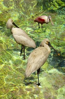 WATER BIRDS by photofiction