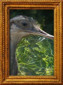 WATER EMU by photofiction