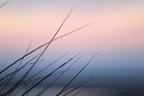 Dünengras04 von Dominik Brenne