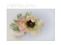 Frühling PK von Brigitte Jach