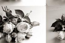 Rosen by Brigitte Jach