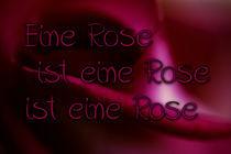 Eine Rose ist eine Rose by Brigitte Jach