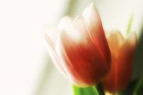 Tulpen am Fenster von Brigitte Jach