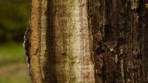 Baumlandschaft 3 by juergenrose