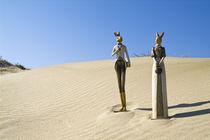 Hasenpaar auf der Düne