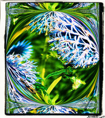 Gartenkaleidoskop von netti75
