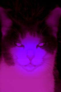 Katze im anderen Licht by Henriette Abt
