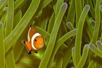 Nemo by Volker Rohe