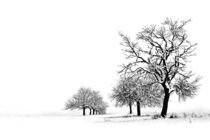 Winterimpression by Heidi Brausch