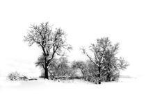 Wintermärchen von Heidi Brausch