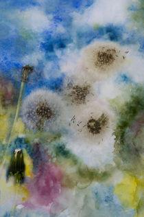 Pusteblumen von Heidi Brausch