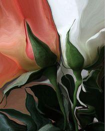 two Roses von Diana vonBohlen