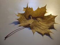 Abschied vom Herbst von Diana vonBohlen