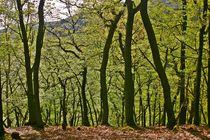 Binger Wald von rheo