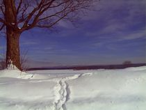 Baum im Winter von manfred richter