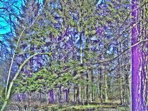 Zauberwald by manfred richter