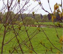 kühe hinter gittern by manfred richter