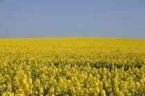 Rausch in Gelb von rheo