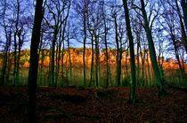 Zauberwald von rheo