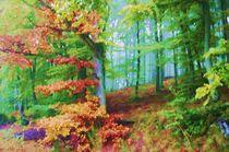 Märchenwald von rheo