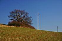 Telegraph Hill von rheo