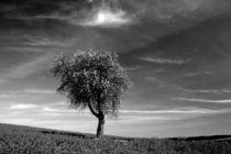 Apfelbaum im Frühling by rheo