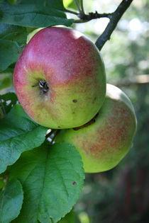 rote Äpfel   by hadot