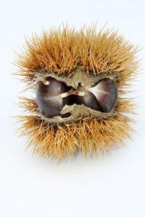 Edelkastanie chestnuts  by hadot