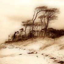 Windflüchter von fotodehro
