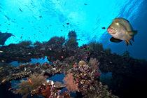 Unterwasser am Wrack von Siegfried Meyer