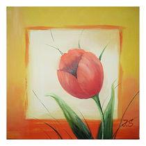 Tulpenblüte von Irena Scholz