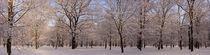 Winter im Park - Baumstammpanorama by magdeburgerin