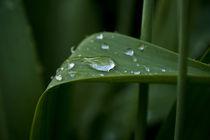 Regentropfen auf einem Tulpenblatt by magdeburgerin