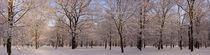 Winterwald von magdeburgerin