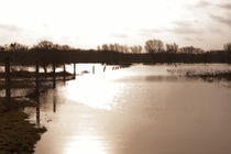 Hochwasser von magdeburgerin