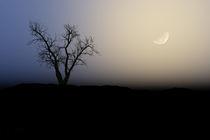 Baum im Mondlicht von perolsche