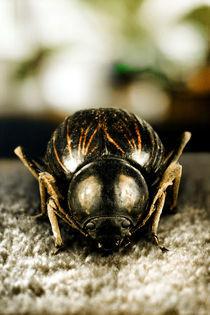 Escarabajo III von Patrick Mohl