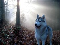 Husky im Nebel 2 von huskymile