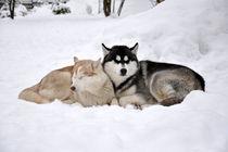 Schlaf im Schnee by huskymile