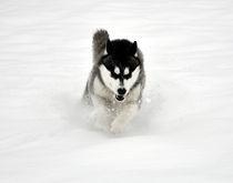 Run by huskymile