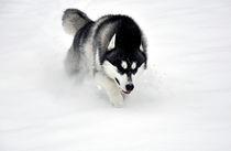 Run 3 by huskymile