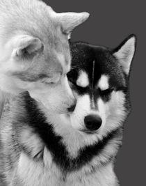 Husky Love von huskymile