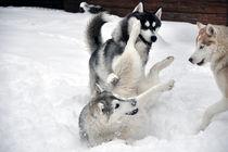 Action von huskymile