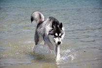 Wasser by huskymile