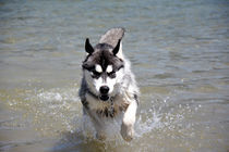 Wasser2 by huskymile