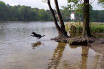 Hundeglück im Grunewald! by ancalima